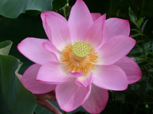 Five Mindfulness TrainingsRecitation Ceremony