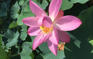 Practicing Love with Compassion and Lovingkindness