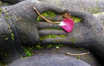 Mindfulness, Healing, and Wholeness