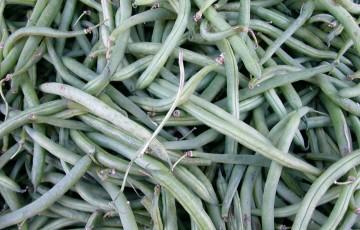 Thanksgiving Day Schedule and Ambassador String Bean