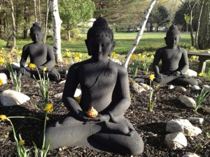 Finding Joy in Our Sitting Meditation