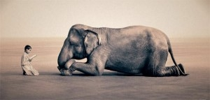 A Wild Love for the World*: Touching our Despair with Compassion