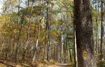 Trail Blazing along the Path