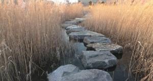 Mindfulness, AA, and Awakening