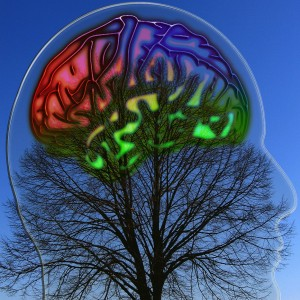 Mindful Consumption and Our Extended Brain