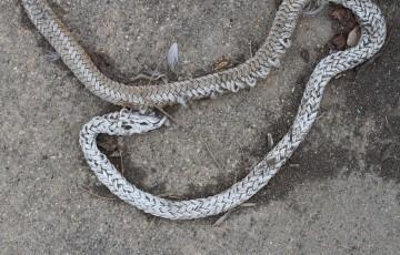 The Three Natures: Snake, Rope, and Hemp
